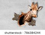 giraffe pop out of the wall. | Shutterstock . vector #786384244