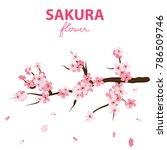 sakura flower banner vector... | Shutterstock .eps vector #786509746