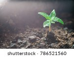 a small plant of cannabis... | Shutterstock . vector #786521560