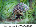 leopard tortoise in kruger... | Shutterstock . vector #786549040