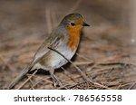 robin  erithacus rubecula... | Shutterstock . vector #786565558