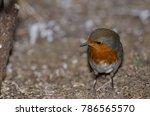 robin  erithacus rubecula... | Shutterstock . vector #786565570