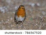 robin  erithacus rubecula... | Shutterstock . vector #786567520