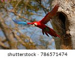 big red parrot  fly from nest... | Shutterstock . vector #786571474