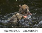 grizzly bears feeding on salmon | Shutterstock . vector #786608584