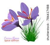 vintage card with crocus flower ... | Shutterstock .eps vector #786617488