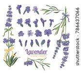 lavender flower on white...   Shutterstock .eps vector #786637066