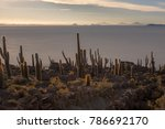 cacti overlooking the sunset on ... | Shutterstock . vector #786692170