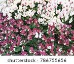 modern orchid garden design   Shutterstock . vector #786755656