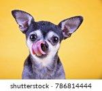 cute little chihuahua licking... | Shutterstock . vector #786814444