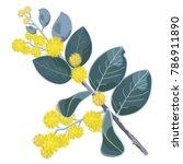 Wattle Tree Flowers Vector