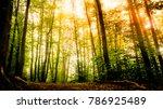 scenic view of summer sun... | Shutterstock . vector #786925489