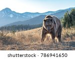 brown bear in the mountains   Shutterstock . vector #786941650
