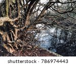 messy tree with entangled... | Shutterstock . vector #786974443