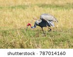 two thai sarus crane   mother...   Shutterstock . vector #787014160