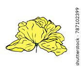 peony flower illustration.... | Shutterstock . vector #787102399
