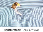 dog lonely sleeping in striped... | Shutterstock . vector #787174960
