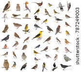 Collage Wild Birds Names Isolated - Fine Art prints