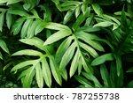 fresh green leaves background | Shutterstock . vector #787255738