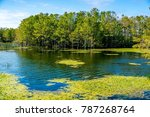 cypress dome in florida swamps | Shutterstock . vector #787268764