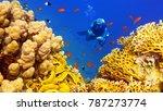 man scuba diver near beautiful... | Shutterstock . vector #787273774