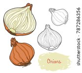 hand drawn colorful onions | Shutterstock .eps vector #787286356