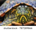 Colorful Turtle Portrait ...