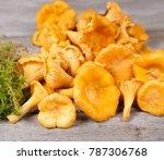 fresh chanterelles and moss on... | Shutterstock . vector #787306768