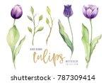 Watercolor Floral Tulip...