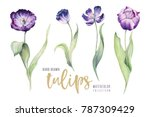 watercolor floral tulip... | Shutterstock . vector #787309429