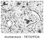 root and tuberous vegetables ... | Shutterstock .eps vector #787329526