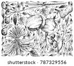 root and tuberous vegetables ... | Shutterstock .eps vector #787329556