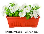Garden Flower Pot With White...