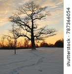 Small photo of Ajax waterfront at sunset with snow, trees, sky, and the 400+ year old tree.