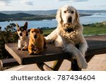 Three Dogs Sitting On A Bench...