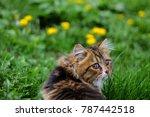 Cat Looks Back In Spring Field...