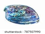 New Zealand Paua Shell ...