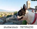 dof of spello | Shutterstock . vector #787596250