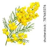 yellow mimosa flower branch...   Shutterstock .eps vector #787665376