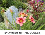Daylily Flowers Bloom In The...