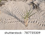 Hermit Crab Tracks On Sand With ...