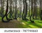 A Weird Curious Forest In...