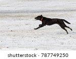dog running in the snow   Shutterstock . vector #787749250