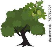 infographics of oak leaves. oak ... | Shutterstock .eps vector #787752709