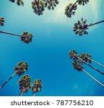 palm trees seen from below ... | Shutterstock . vector #787756210