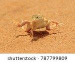 shovel snouted lizard | Shutterstock . vector #787799809