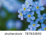 closeups of forget me not... | Shutterstock . vector #787833850