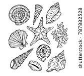 Seashells Set Vector Isolated...