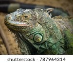 close up to the face of green... | Shutterstock . vector #787964314