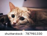 Stock photo ginger cat near the computer keyboard 787981330